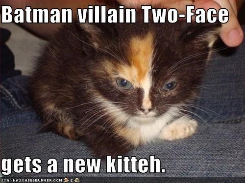 Batman Villain Two Face Gets A New Kitteh Cheezburger Funny