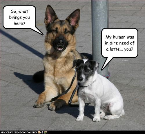 coffee,german shepherd,human,latte,leash,need,pole,rat terrier,waiting
