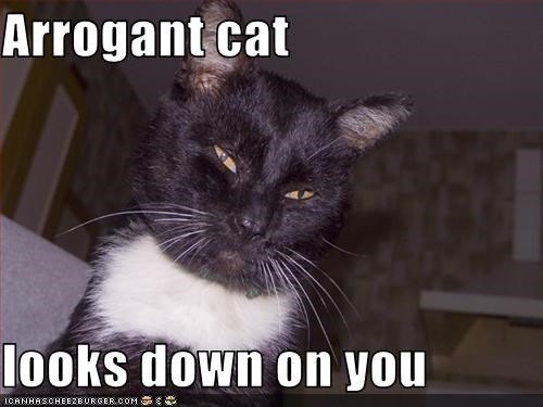 04f7c855e7 Arrogant cat looks down on you. Share. Tweet. WhatsApp. Pin It. Email.  Cheezburger Image 2210825984