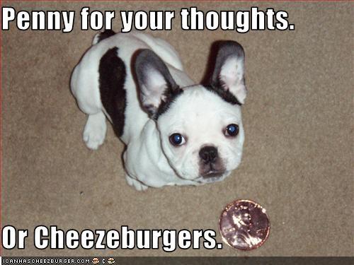 Cheezburger Image 2214896896