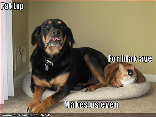 bed,black eye,fighting,lolcats,peace,punch,rottweiler
