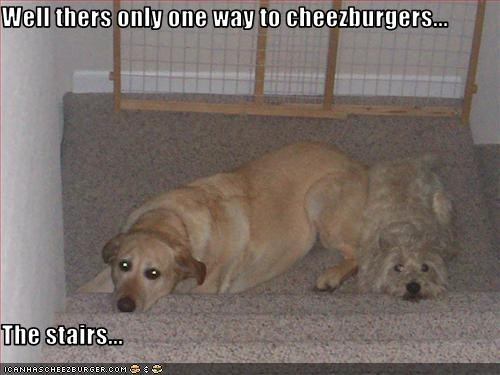 Cheezburger Image 2215177984