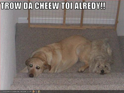 Cheezburger Image 2216261888