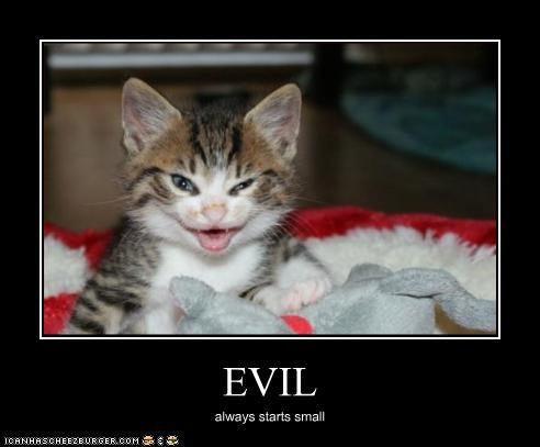 evil kitten - 2216746752