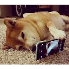 A picture of a dog taking a selfie and you can see him using the phone- cover picture for a list of cute animals that have discovered how to take a selfie