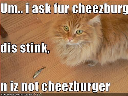 Cheezburger Image 2218590976