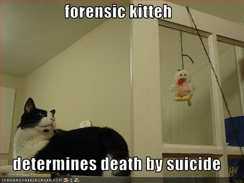 Forensic Kitteh Determines Death By Suicide Cheezburger Funny Memes Funny Pictures