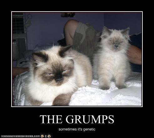 grumpy kitten - 2220392192