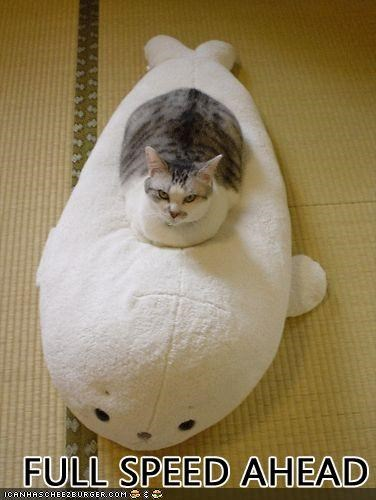 cat fat lolcat torpedo vehicle - 2221682944