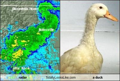 animals,duck,radar image,weather