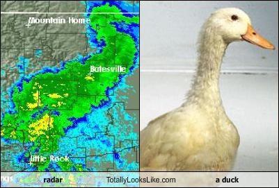 animals duck weather - 2222948608