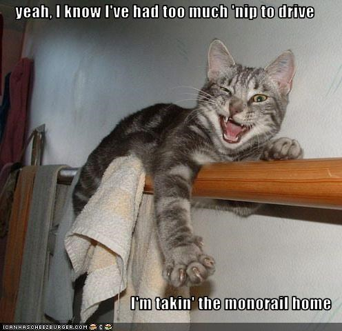 drunk,monorail cat