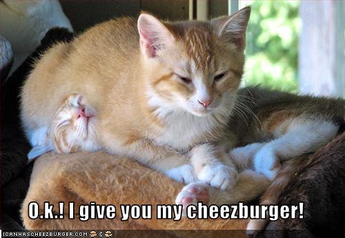 Cheezburger Image 2226844928