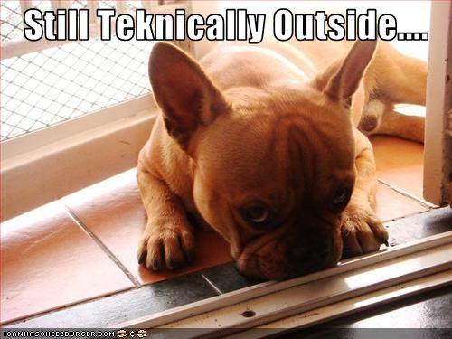 door french bulldogs inside outside puppy - 2226852096
