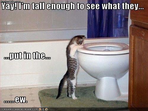 do not want ewww toilet - 2229345024