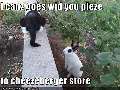 Cheezburger Image 2230142208
