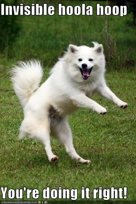 doing it right,hula hoop,invisible,samoyed,toys