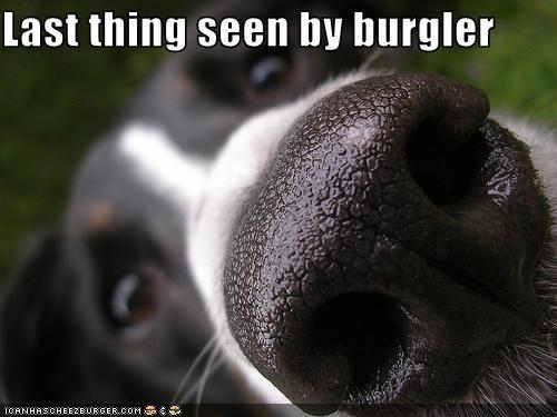 Cheezburger Image 2231691008