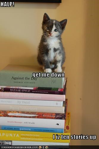 cute,halp,kitten,stuck