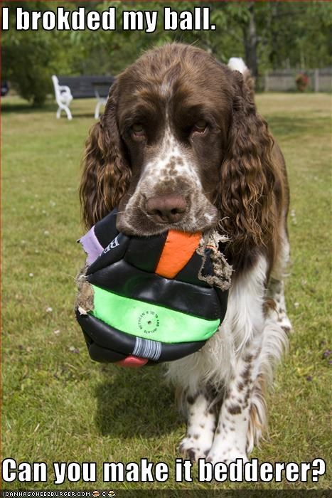 balls,broken,deflated,english springer spaniel,fix