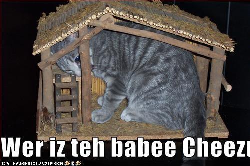 Cheezburger Image 2233845504