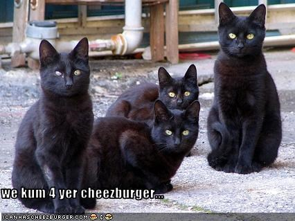 Cheezburger Image 2234938624
