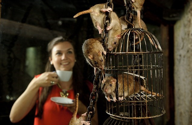 new trend: a rat cafe will be open in San Francisco On July