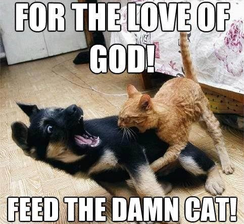 Vintage and Classic Cat Memes for Throw Back Thursday - Cover meme of cat eating the dog who is reacting with surprise and instructing you to feed the cat already.