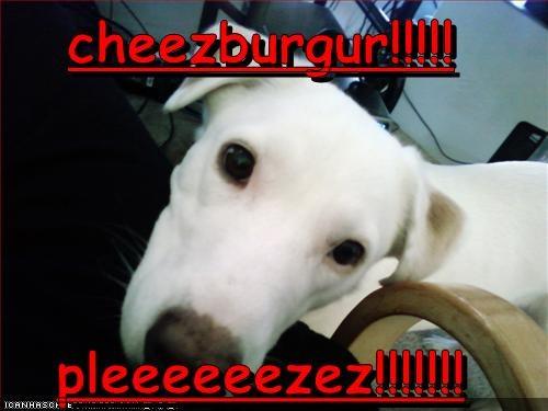 Cheezburger Image 2237584128
