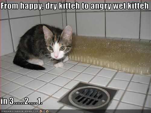 From happy, dry kitteh to angry wet kitteh  in 3......2.....1.