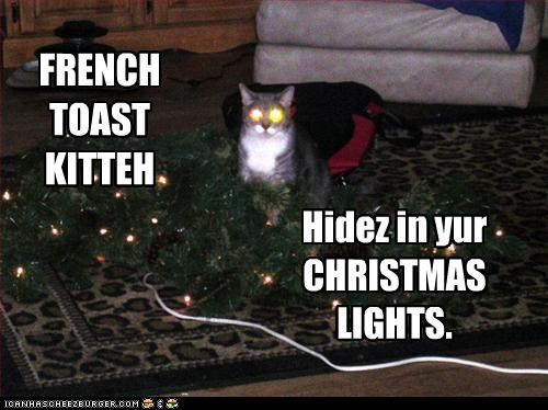 FRENCH TOAST KITTEH Hidez in yur CHRISTMAS LIGHTS.