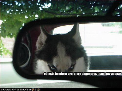 angry,cars,dangerous,eyes,husky,mirrors,objects