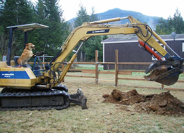 Picture of a dog acting as a construction worker using a machine to dig up dirt - cover photo for animals that forgot to act like animals