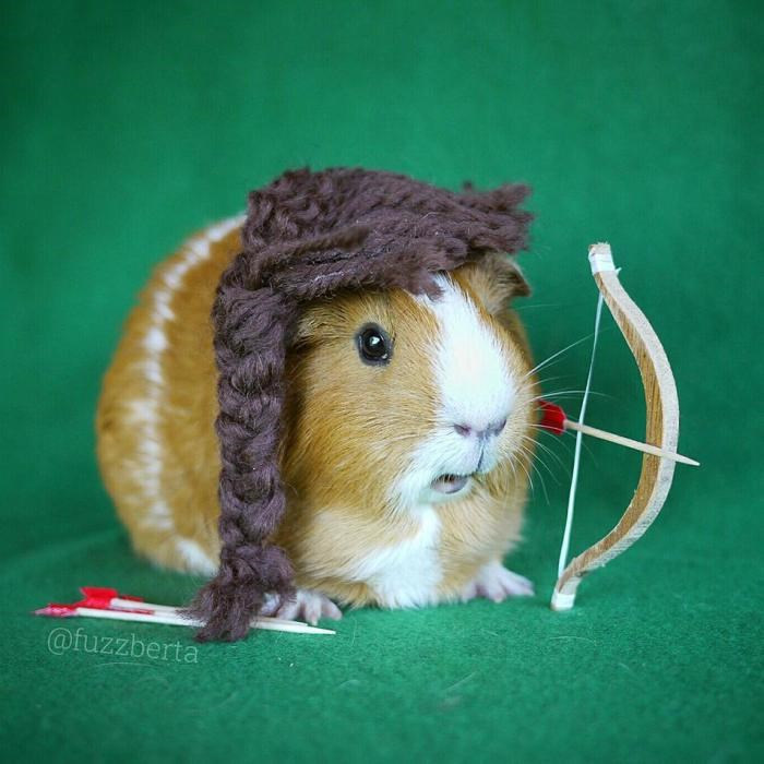 Cute picture of Fuzzberta as Robinhood - cick to view more pics of the mini guinea pig