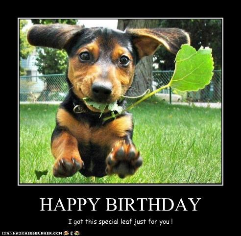 Dog - HAPPY BIRTHDAY I got this special leaf just for you ! 1CANHSCHEE2EURGER coM