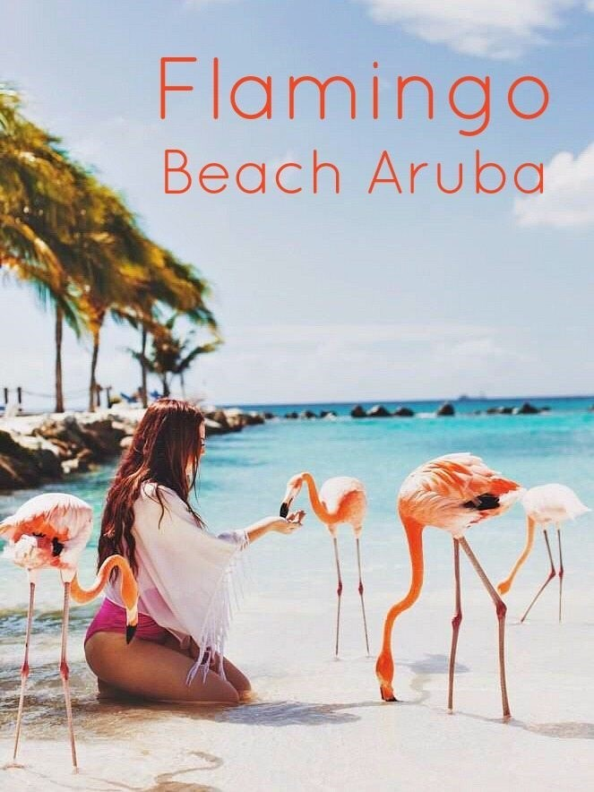 5 worldwide vacation beaches where you can mingle with wildlife animals - Cover graphic of Flamingo Beach in Aruba with pink flamingos eating out a woman's hand.