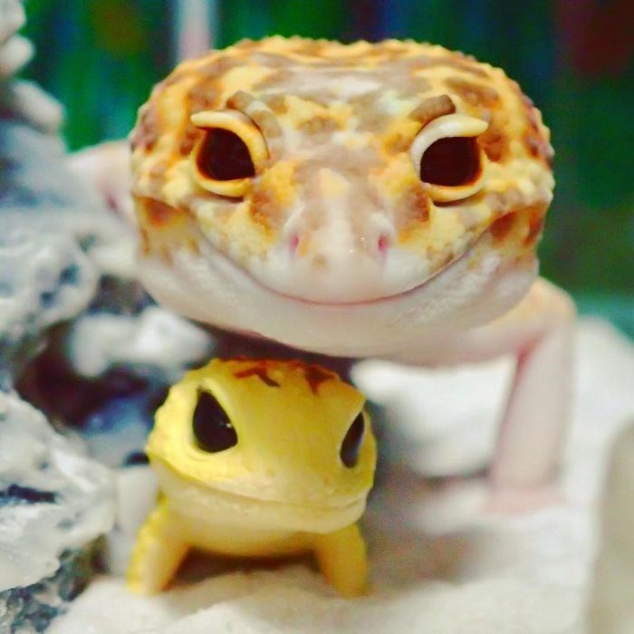Very cute smiling gecko momma and cutest baby gecko ever.