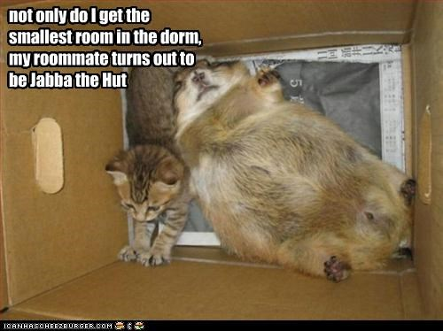 box,kitten,lolgroundhogs