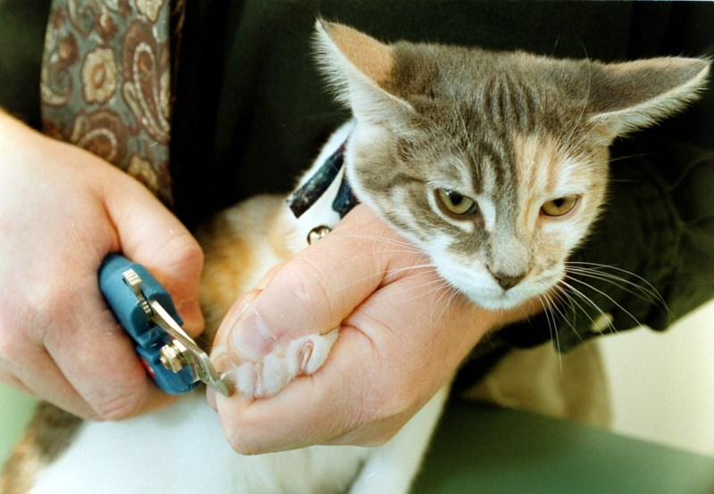 Why you shouldn't declaw your cat - picture of cat getting claws trimmed instead.