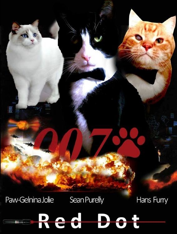 The cats from James Bond Movies and some James Bond Cat Memes - Cover image of funny 007 cat hiding from bad guys.