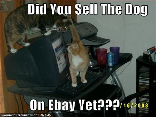 Did You Sell The Dog On Ebay Yet Cheezburger Funny Memes Funny Pictures
