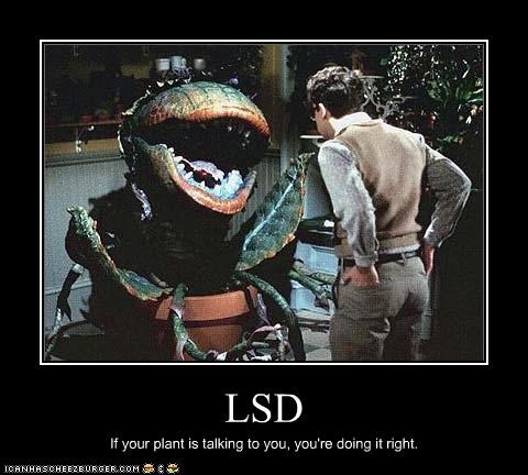 LSD If your plant is talking to you, you're doing it right.