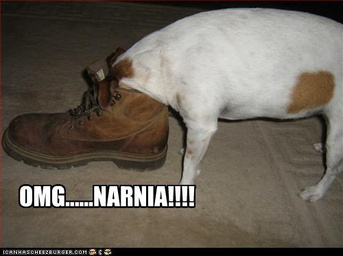 face jack russel terrier narnia shoes - 2257185024