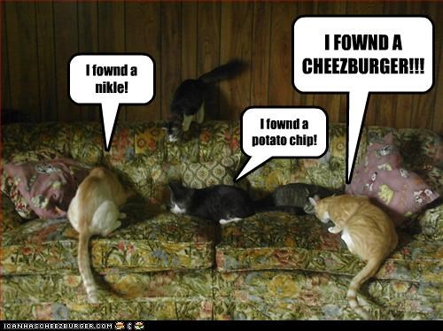 Cheezburger Image 2257946368