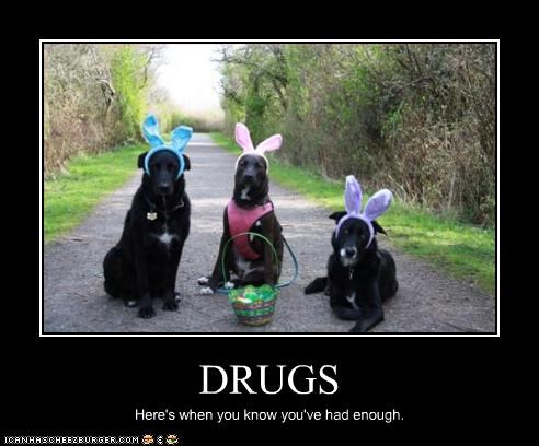 bunny ears,costume,drugs,easter,hallucination,labrador