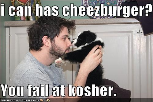 Cheezburger Image 225836800