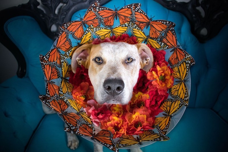 Dogs in shelter with cones of fame instead of cones of shame