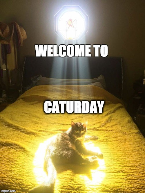 A picture of a cat siting on the bed and the sun light coming down from the window looks like a spotlight, saying welcome to caturday - cover photo for a list of funny gifs and memes of cats
