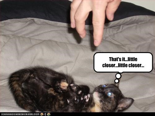 attack kitten plotting - 2260021504