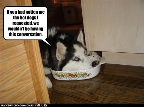 bowl,conversation,empty,food,hotdog,husky